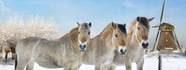 Van Breden paarden-winter