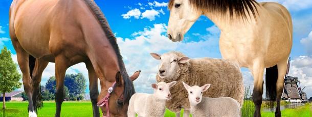 Van Breden paarden
